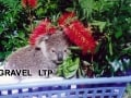 koala-display-001-1000px