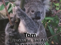 koala-display-002-1000px