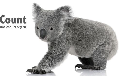 Koala Count