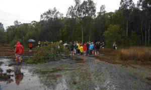 mambo wetland group