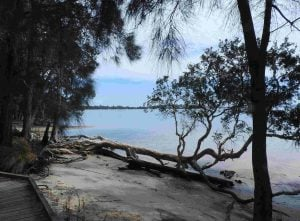 Tanilba Bay