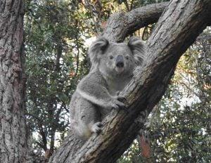 Elsie in a tree
